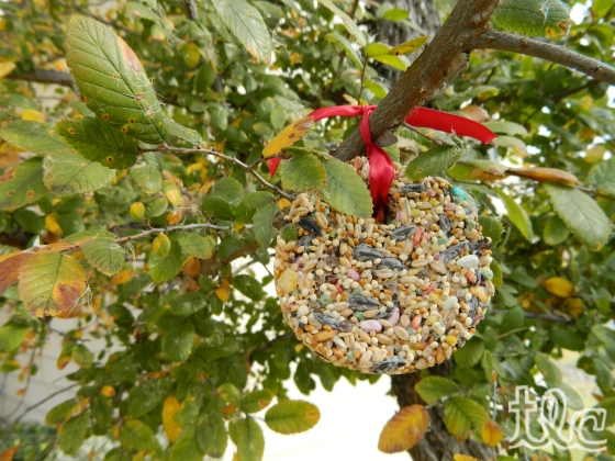 Bird Seed Ornaments (10) copy