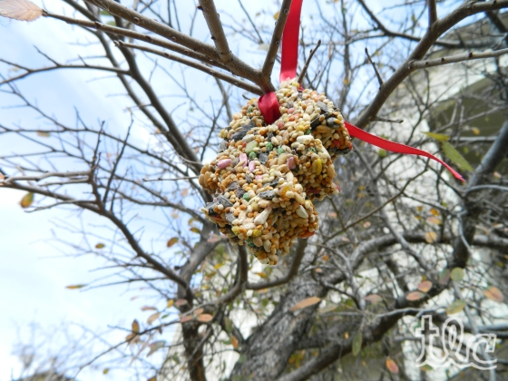 Bird Seed Ornaments (7) copy